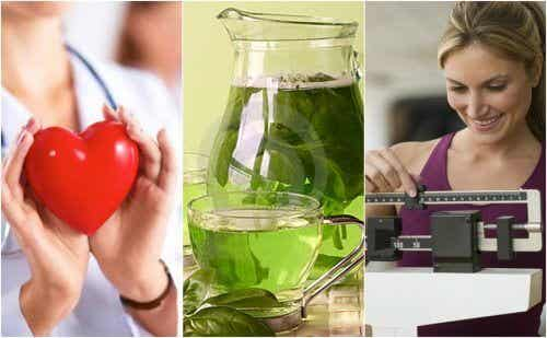 6 importants bienfaits du thé vert