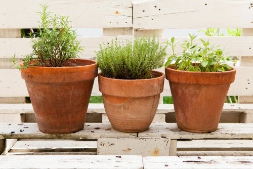 Endroit pour les plantes aromatiques.