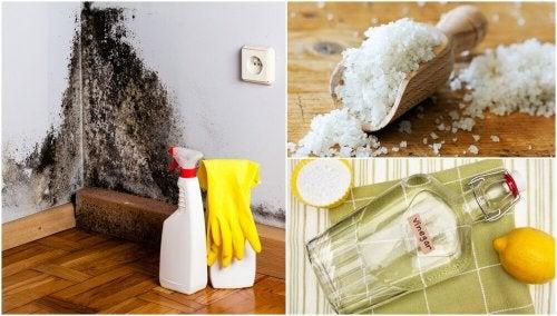 5 façons efficaces de vous débarrasser de l'humidité
