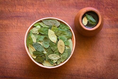 Infusion de feuilles de coca : des bienfaits surprenants pour la santé