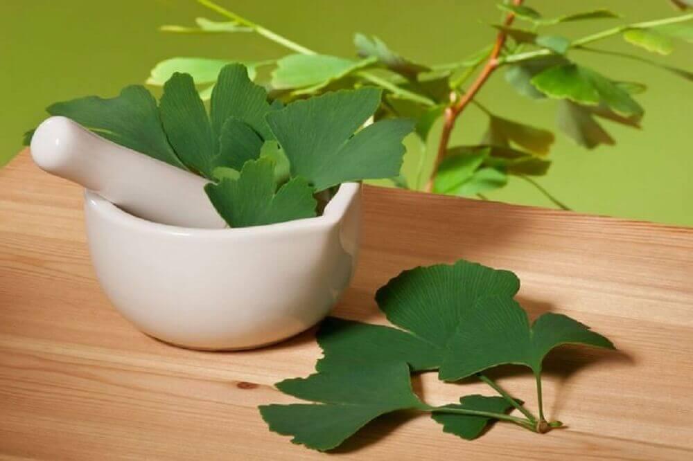 Remède contre les acouphènes au gingko biloba
