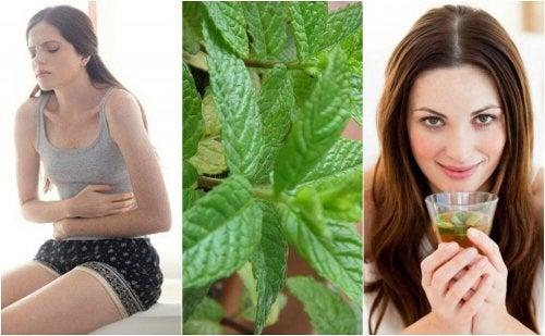 Découvrez 5 remèdes maison à la menthe