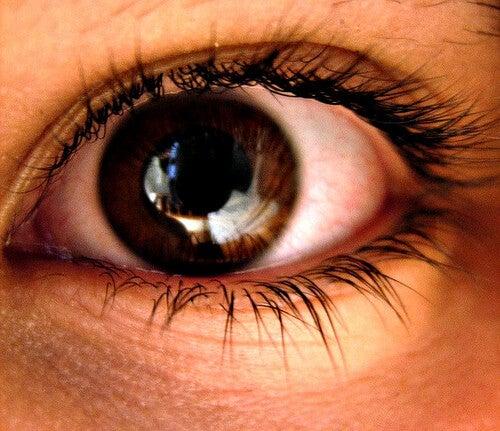 pupille des yeux