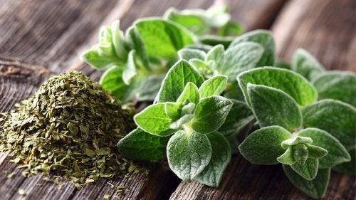 remède naturel à base d'origan pour protéger le système respiratoire