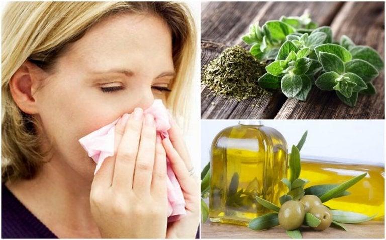 Remède à base d'origan et d'huile d'olive pour votre système respiratoire
