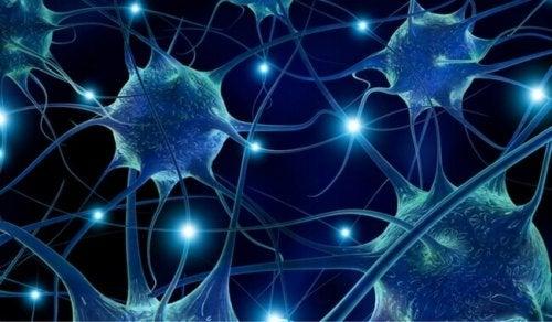 Les pistaches empêchent les problèmes neurodégénératifs.