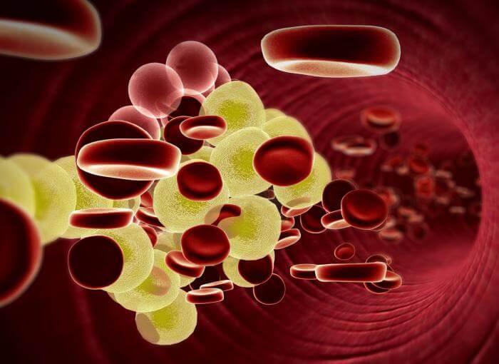 la coriandre lutte contre le cholestérol