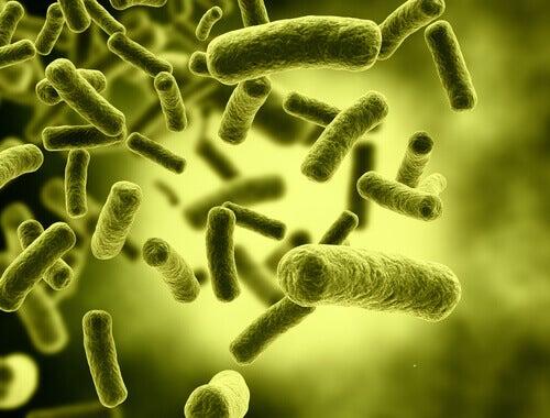 les toxines et la gastro-entérite
