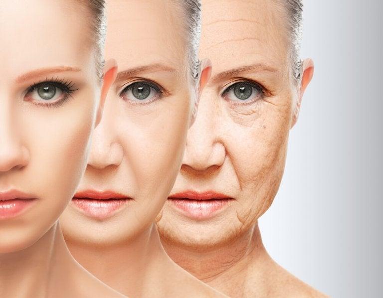 Habitudes alimentaires pour lutter contre le vieillissement prématuré