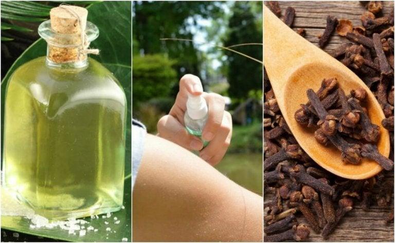 Les 5 meilleurs répulsifs naturels faits maison