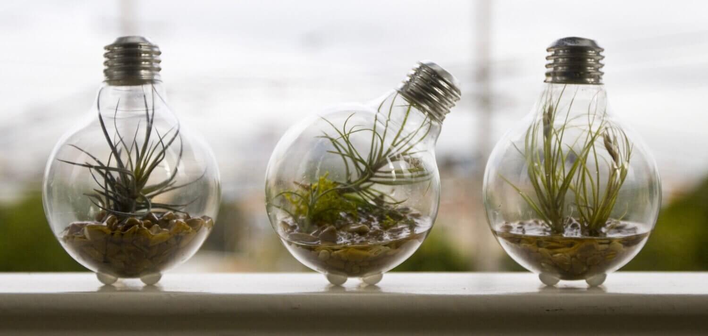 ampoules contenant des plantes