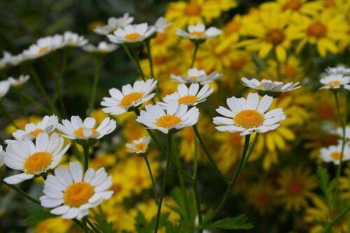 un jardin de fleurs