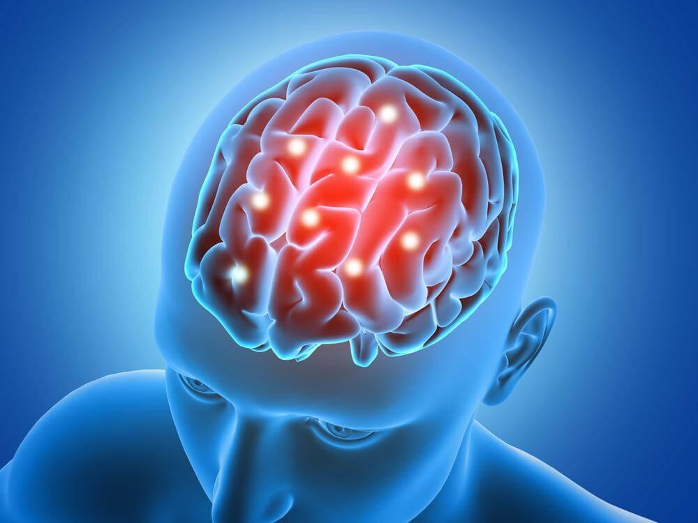 La latéralité du cerveau