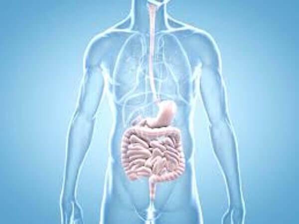 la mauvaise santé intestinale peut être un des premiers symptômes du cancer