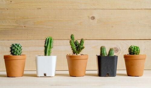 plantes du désert