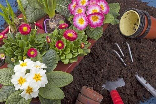 plantes du jardin