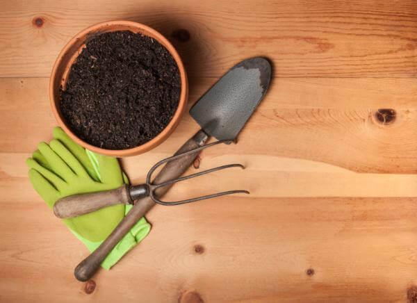 calendula à cultiver