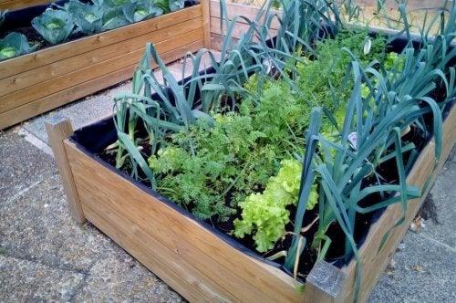 Jardin potager modulaire.
