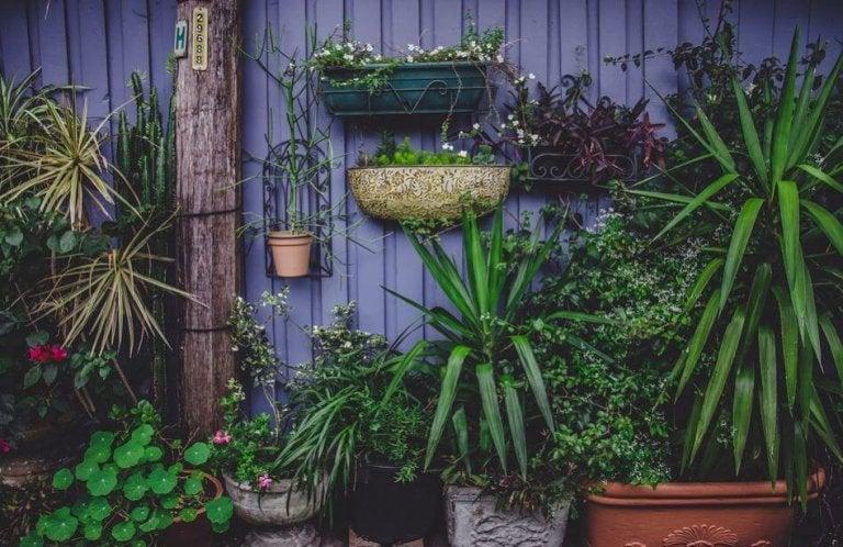 4 idées pour réaliser votre propre jardin potager