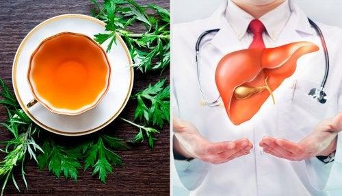 9 propriétés de l'absinthe pour la santé de notre foie