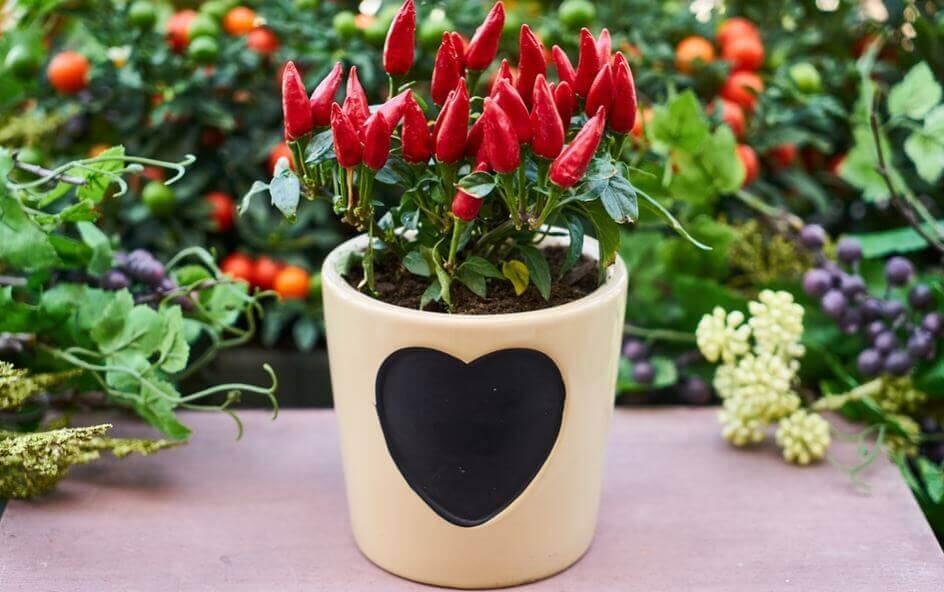 décorer vos pots en optant pour le relief