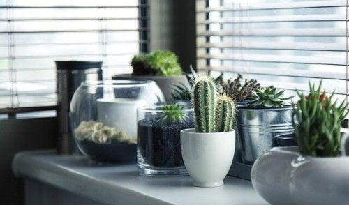 5 idées pour semer vos cactus différemment