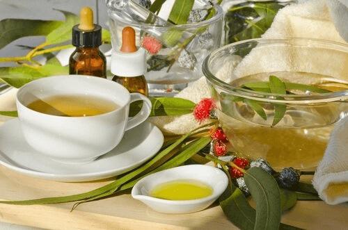 infusion d'eucalyptus pour traiter l'halitose