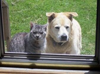 animaux-de-compagnie-les-plus-appropries