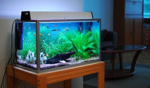 découvrez quelle est la bonne manière de nettoyer un aquarium