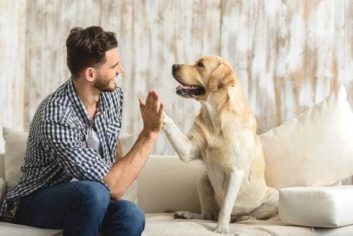 Bienfaits des animaux de compagnie à la maison