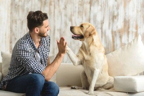 bienfaits des animaux domestiques : ils nous aident à gérer notre anxiété