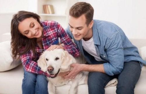 Bienfaits des animaux domestiques à la maison