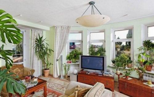 Apprenez à décorer vos espaces avec des plantes