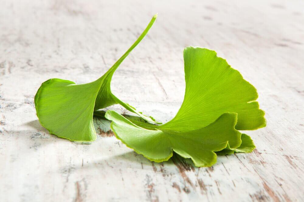 Comment préparer 4 remèdes à base de Ginkgo biloba