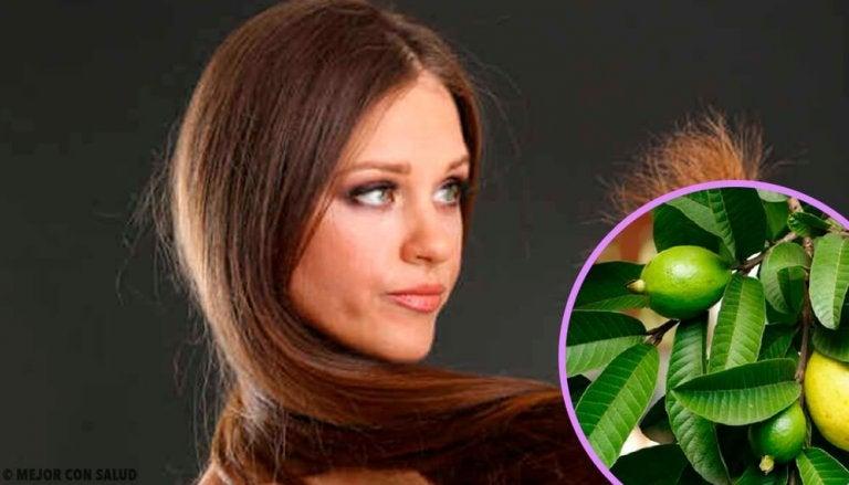 Feuilles de goyave pour traiter les cheveux abîmés