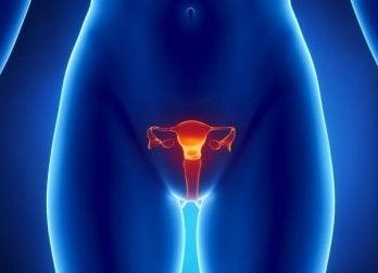 comprendre les cycles menstruels pour tomber enceinte