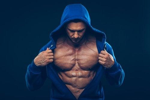 hypertrophie musculaire et la musculation.
