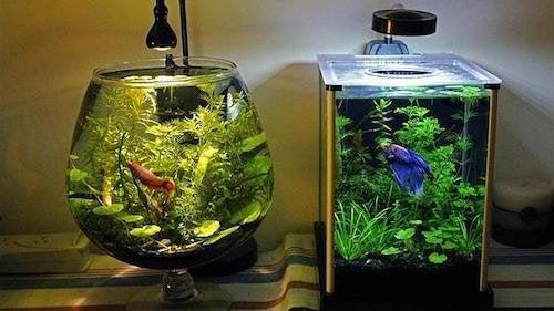 La meilleure manière de nettoyer un aquarium