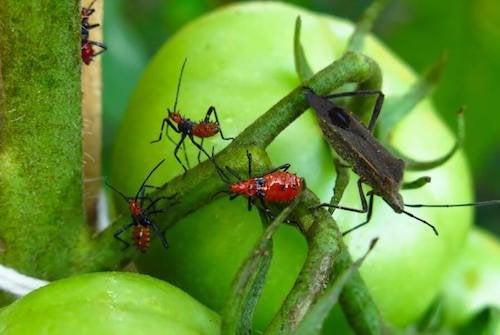 5 poisons pour exterminer les parasites