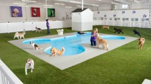 piscines incroyables à thématiques