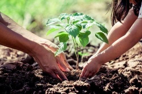 Que faut-il savoir avant de planter un arbre à la maison ?