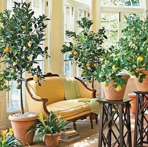 planter un arbre chez soi