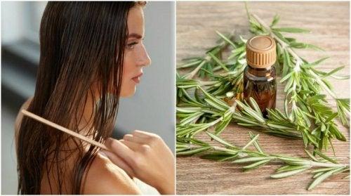 shampoings naturels faits maison à base de romarin