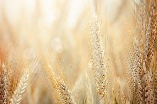 le son de blé est un aliment riche en fibres