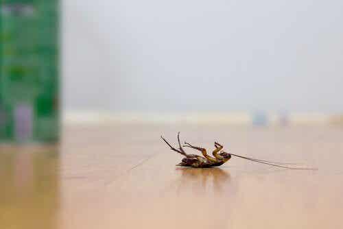 4 astuces pour repousser les cafards sans utiliser d'insecticides