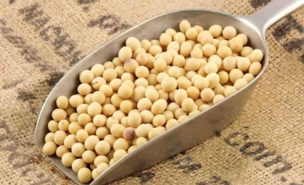 les bienfaits du soja et des recettes saines