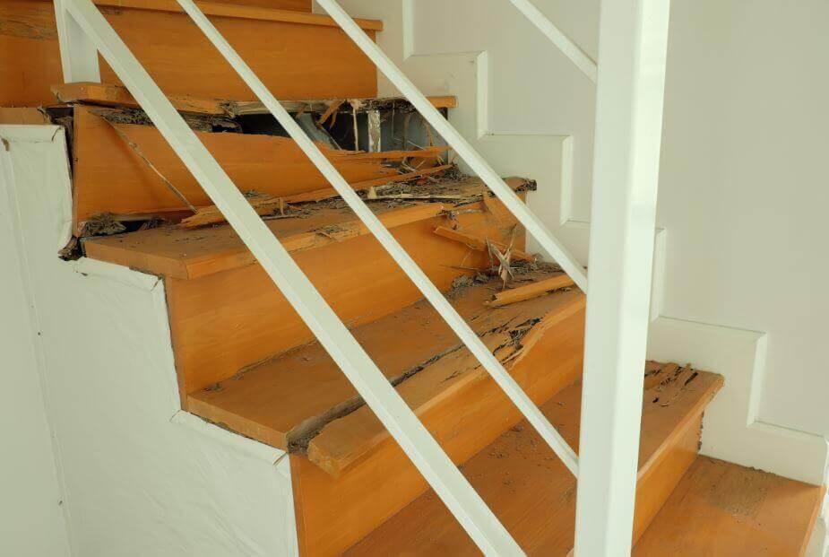Comment éliminer les termites dans une maison ?