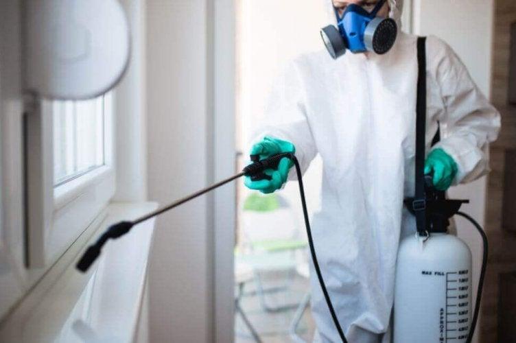 conseils pour éliminer les termites à la maison