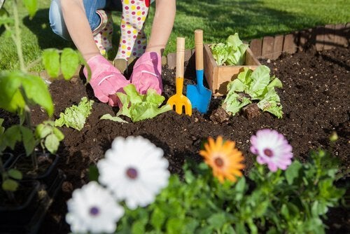 7 façons d'utiliser le vinaigre blanc dans le jardin