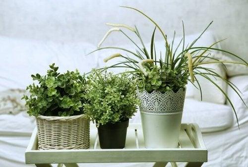 Les plantes aident à avoir un lit toujours parfait
